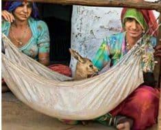 जानिये बिश्नोई समुदाय ने सलमान खान के खिलाफ २० साल तक लड़ाई क्यों राखी जारी
